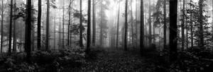 nebel impressionen - 4