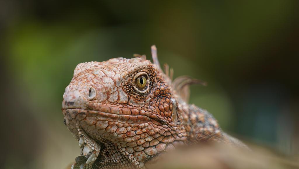 Iguana eye by Alvro