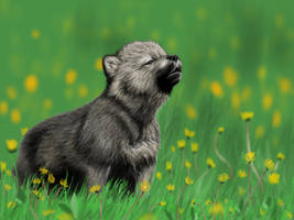 Wolf Pup by Opium01