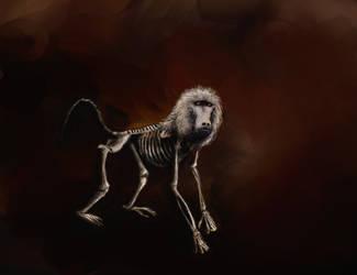 Baboon by merbel