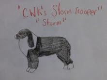 CWK's Storm Trooper by CalliesKennel