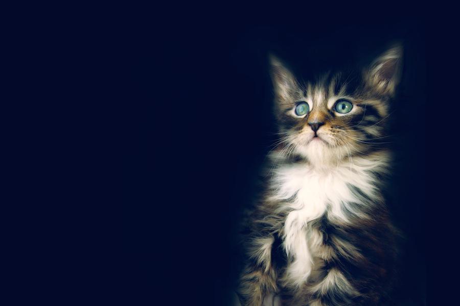 Kitty by sjthunder