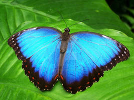 Butterflary