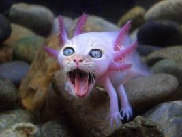 Cat newt thingy... Axolotl by DrFoxxbutt