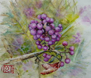 Purple balls, Callicarpa by Kotwinka