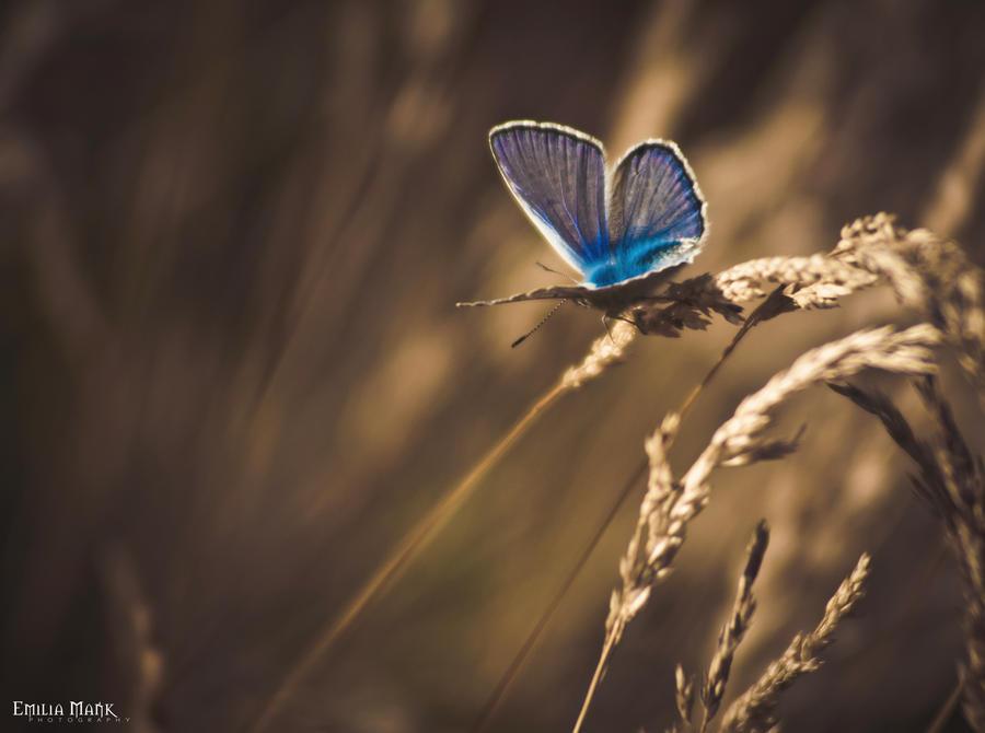 Butterfly by emilka1258