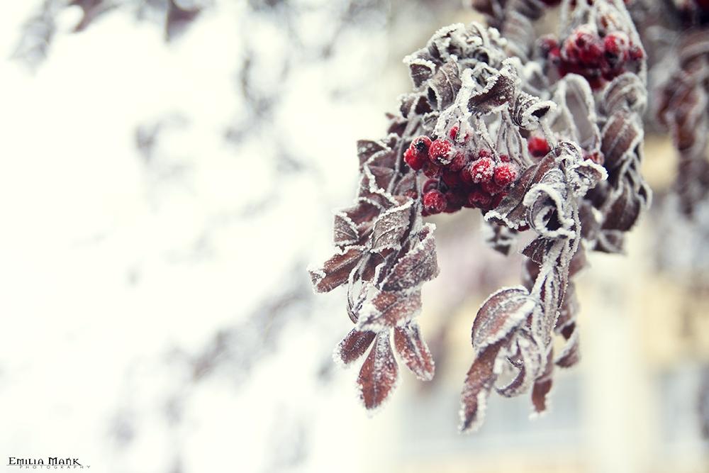 Winter by emilka1258