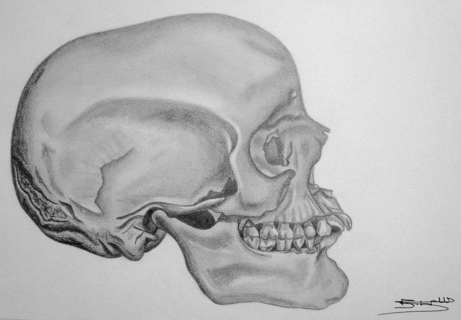 This is a photo of Punchy Skull Profile Drawing