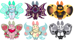 Tiny Poodle moth adopts (closed!!)