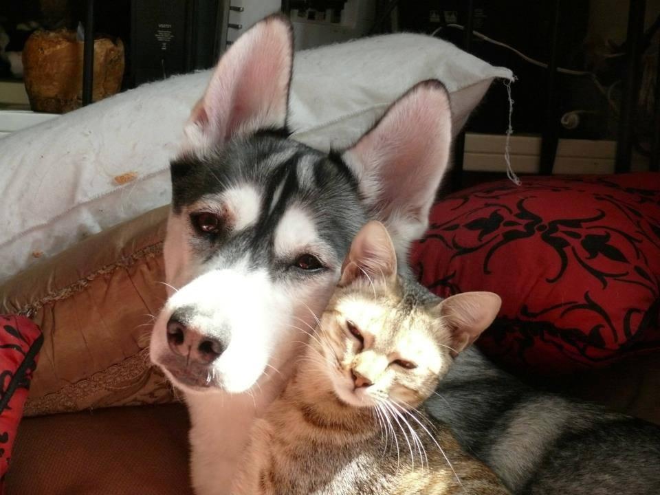 Smile dog and a cat by DarkBloodedKiller on DeviantArt