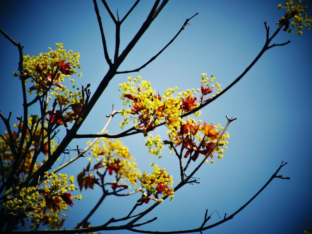 blue sky by veronica-p