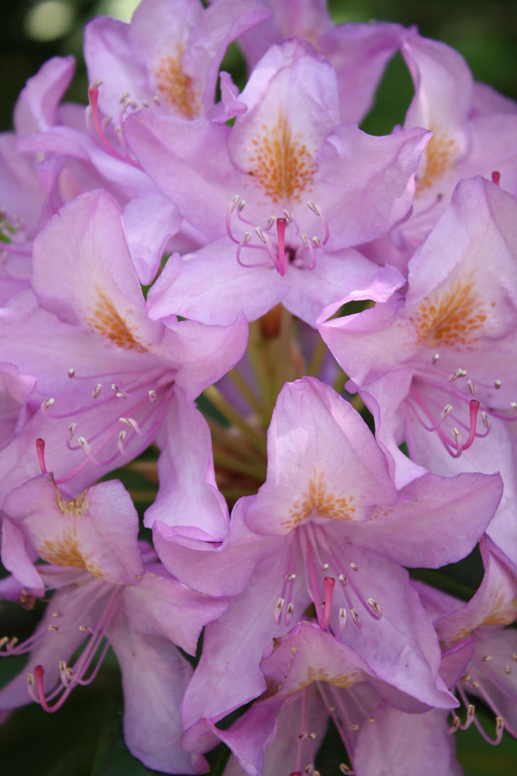 Light Purple Flower by DonLeo85