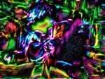 Freddy Boy x Psychedelic