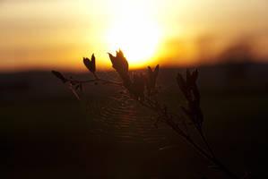 Sunweb by Gorashun