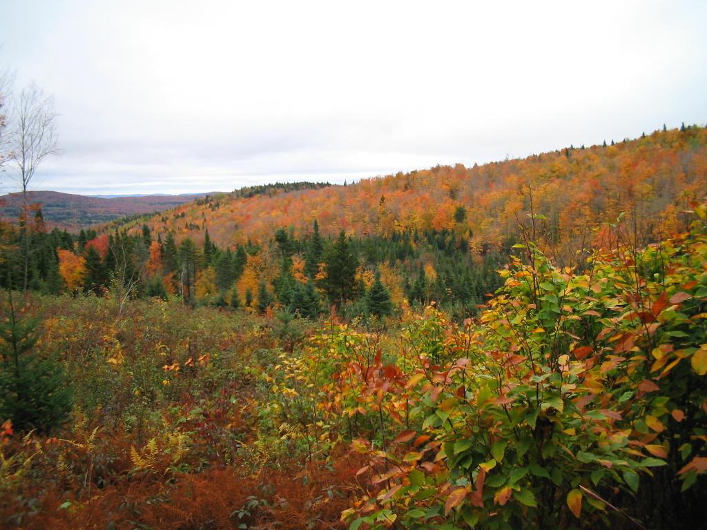 L 39 automne et ses couleurs le site de ma tre zen - L automne et ses couleurs ...