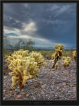 Cholla II by HogRider