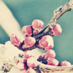 Vintage spring by augustrush008