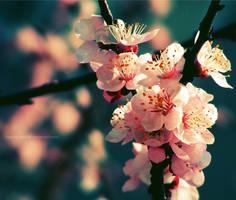 Spring Rhapsody by augustrush008