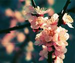 Spring Rhapsody