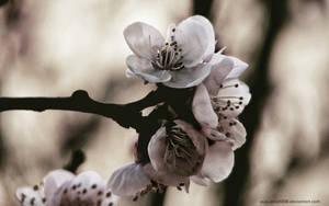 Spring Rhapsody II by augustrush008