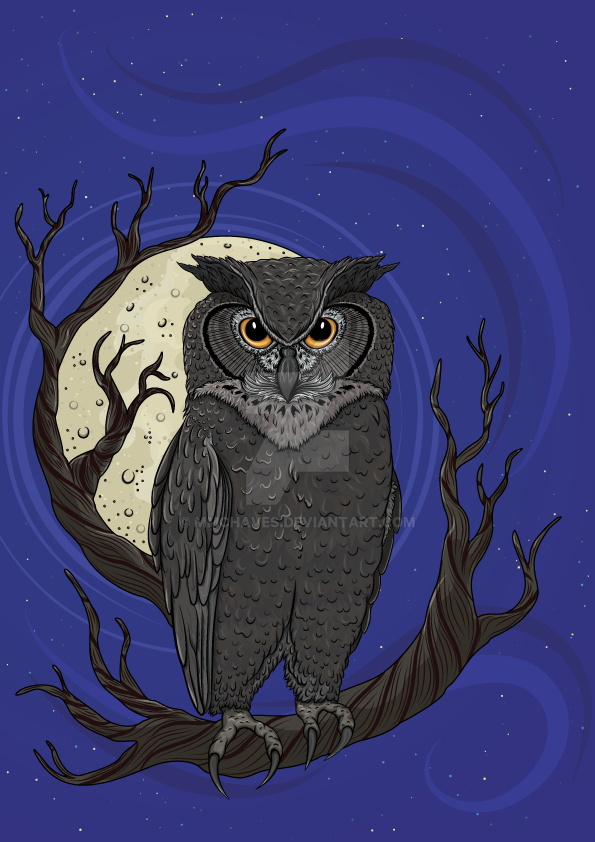 Night Owl by mmchaves
