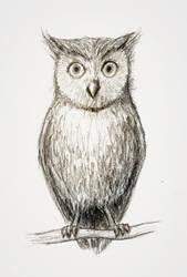 Just a little owl by Snoeffel