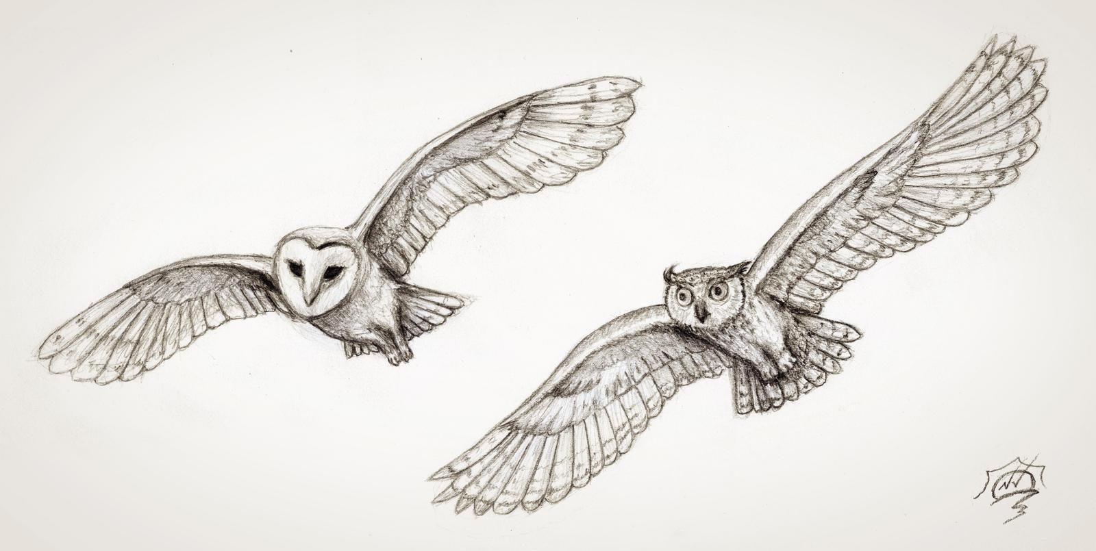 2 flying owls by Snoeffel on DeviantArt