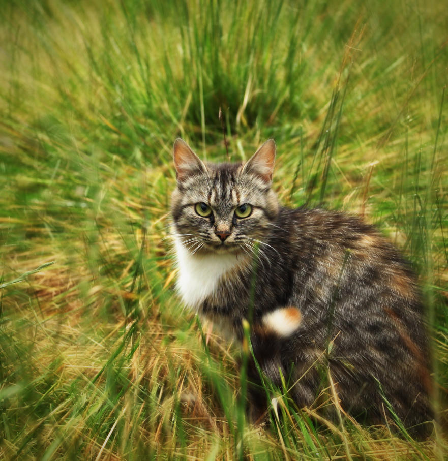 Cat stare by Snoeffel