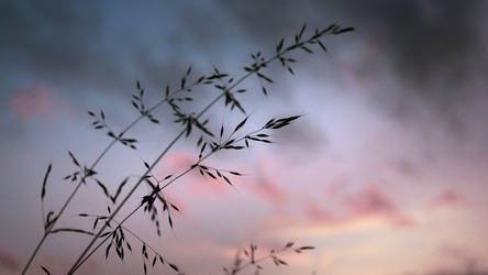 Grass by Snoeffel