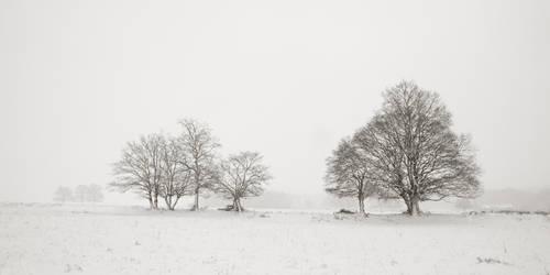 Snowy trees III