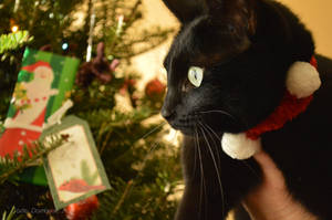 Christmas Cat by jadedamrail