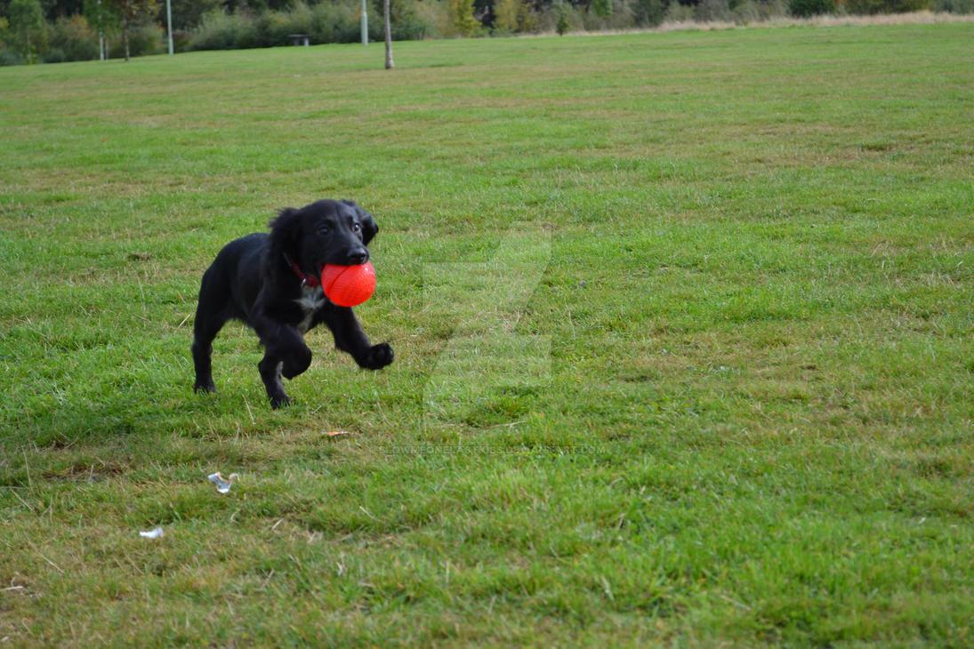 I GOT THE BALL, I GOT THE BALL! by Blowmeonelastkiss
