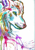 Rainbow Wolf by binkaminka