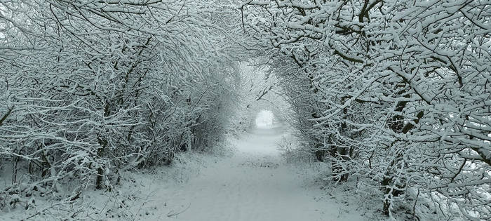 Wintery Lane