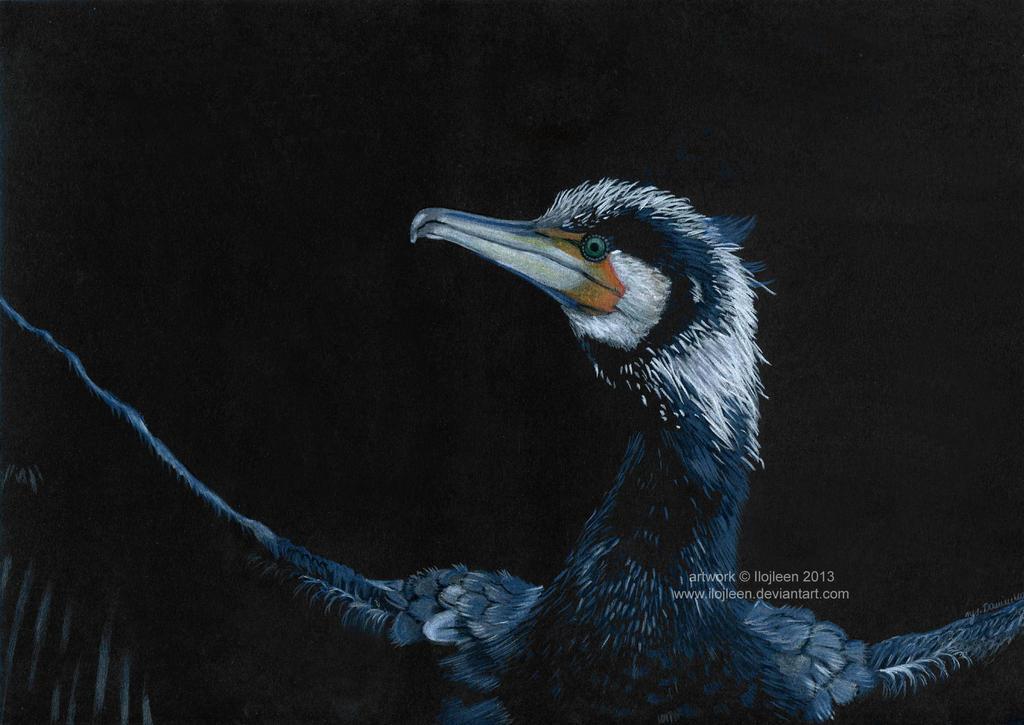Cormorant by Ilojleen
