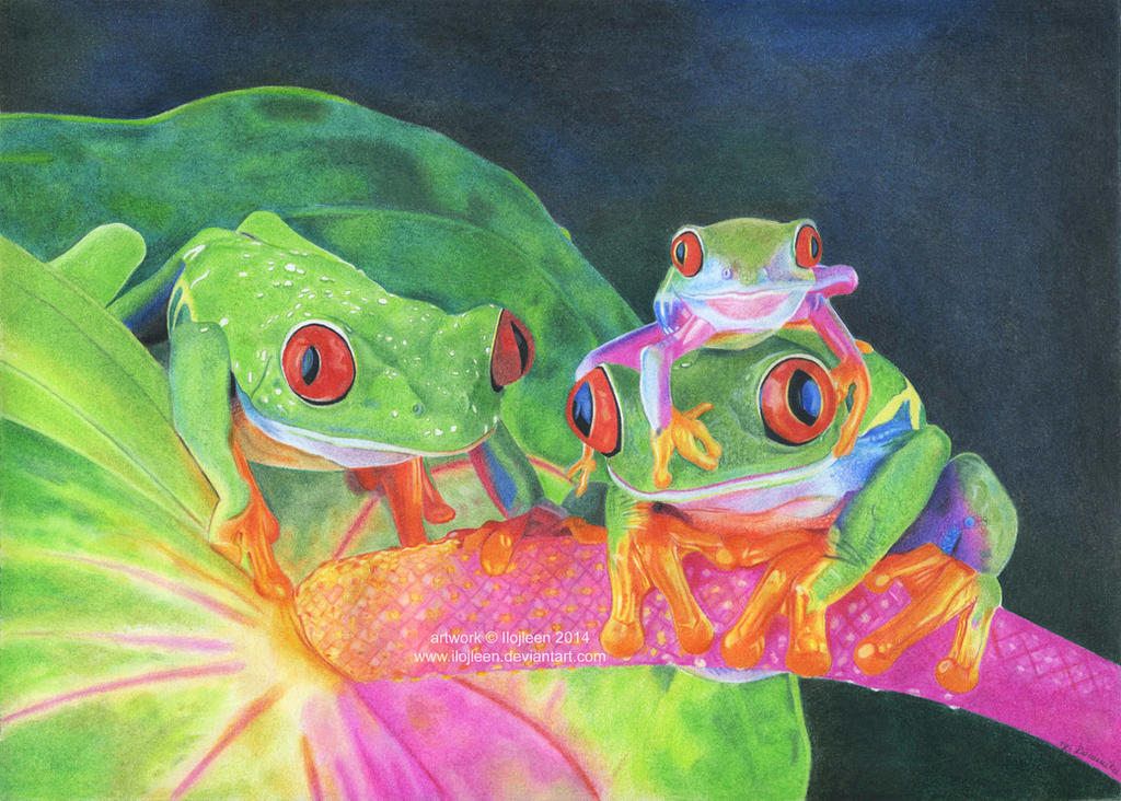 Frogs drawing by Ilojleen