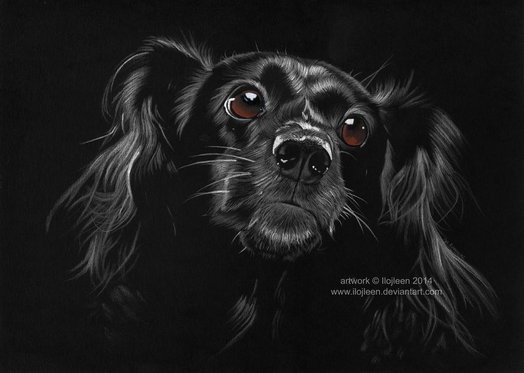 Dog by Ilojleen