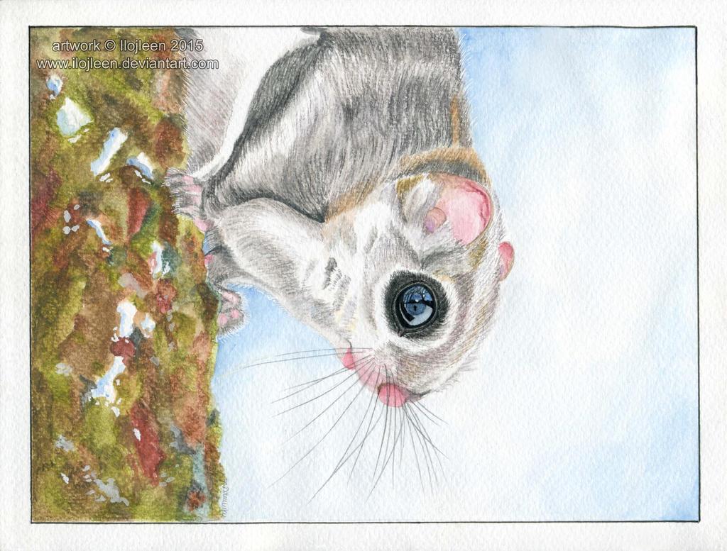 Russian flying squirrel by Ilojleen