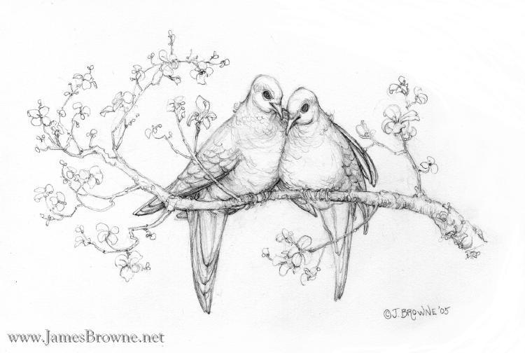 love doves by yaamas