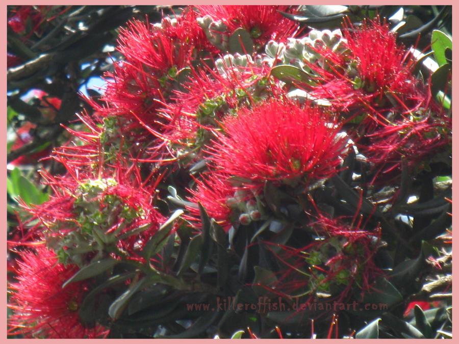 Merry Kiwi Christmas by hazeldazel
