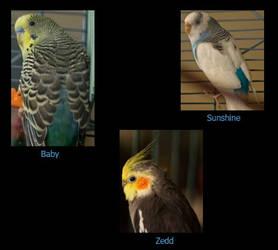 Birdie ID