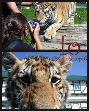 Psychopomp16's Profile Picture
