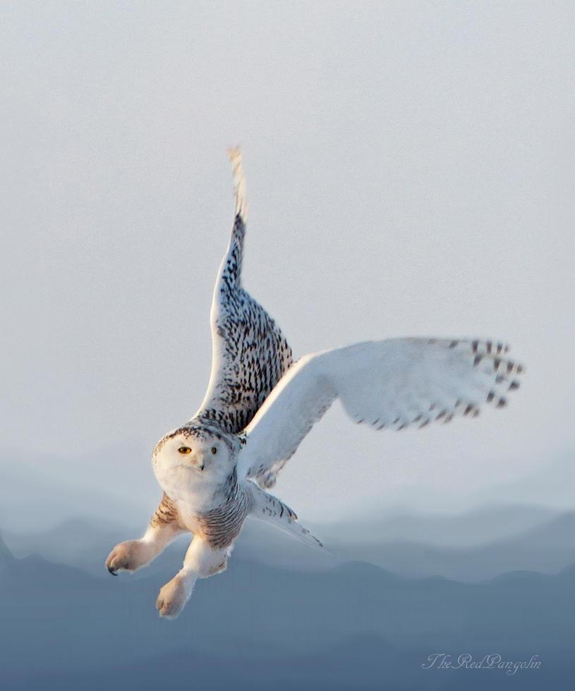 Snowy Take off by Psychopomp16