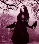 Lady of Crows