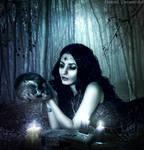 In the night of magic