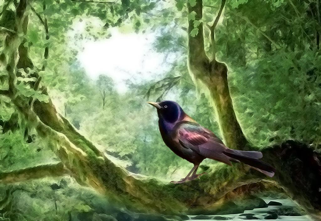 The Bird by Xercatos
