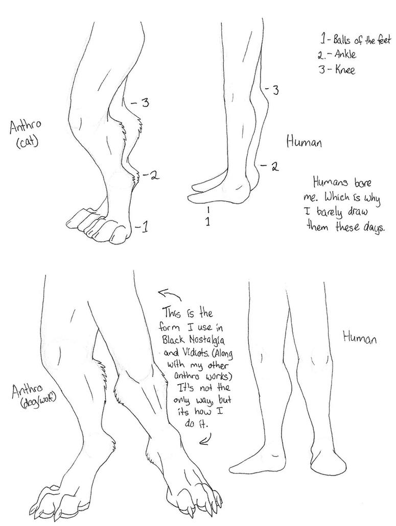 Drawing Tutorials And Dragons Quick Anthro Leg Tutorial By  Dragonessdeanna