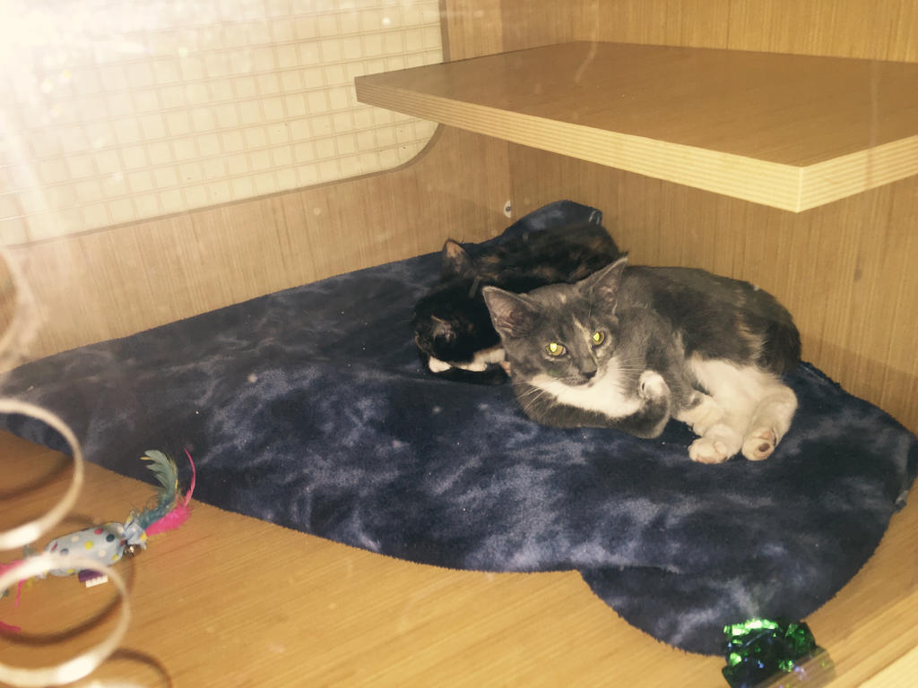 petco cats of the week by michelous