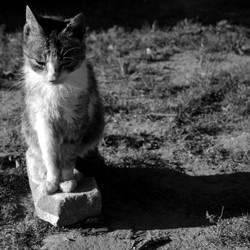 Kot i jego cien