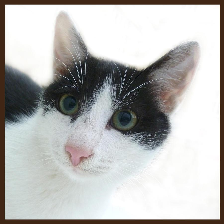 Cat for Jocelyne by jankolas